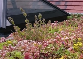 What Makes GrufeKit the Best Living Roof Manufacturer?