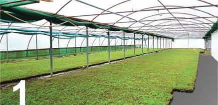 Modules are grown at our nursery