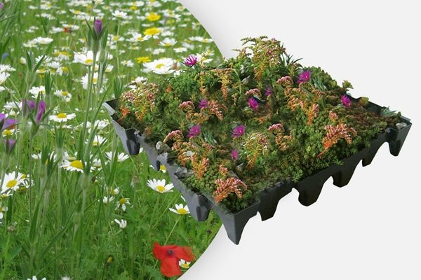 GrufeKit Sedum & Wildflower Modular Roof Tile - 1m² (approx. 4 tiles)
