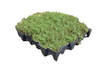 Grufekit Diy Sedum Amp Wildflower Green Roof Tile Kits