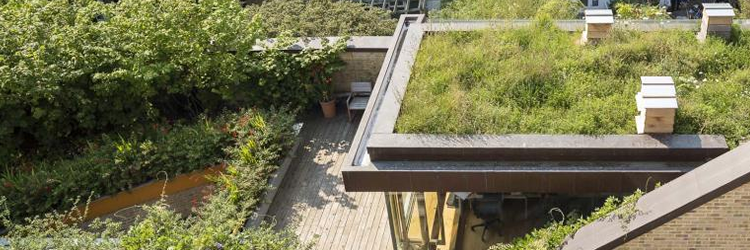 Bere Architects green roof project