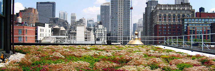 A New York green roof
