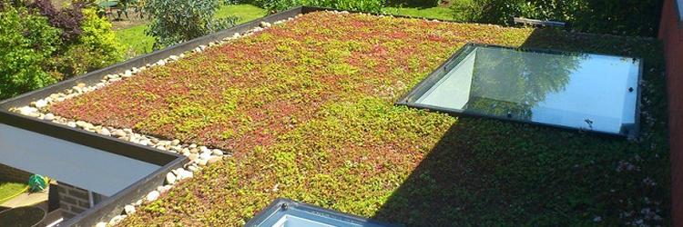 A Portsmouth green roofs by Onyx Roof Works